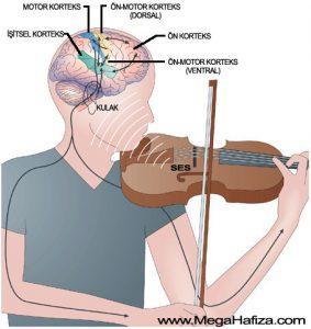 Muzik-Beyin-2