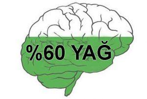 Beyindeki Yağ Oranı
