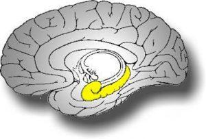 Hafıza, Beyin ve Hipokampus