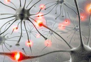 Her beyin hücresinde 1000 sinaps bağlantısı var