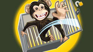 Maymun Tuzakları ve Mutluluk Nedir?