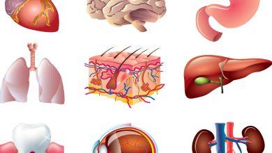 Telomer - DHA - Hangi Organlarınız Genç