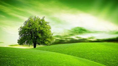 Renklerin Dili - Yeşil Rengin Anlamı