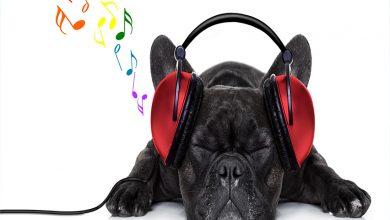 Photo of Müzik Hakkında Duygulu Özlü Ve Güzel Sözler