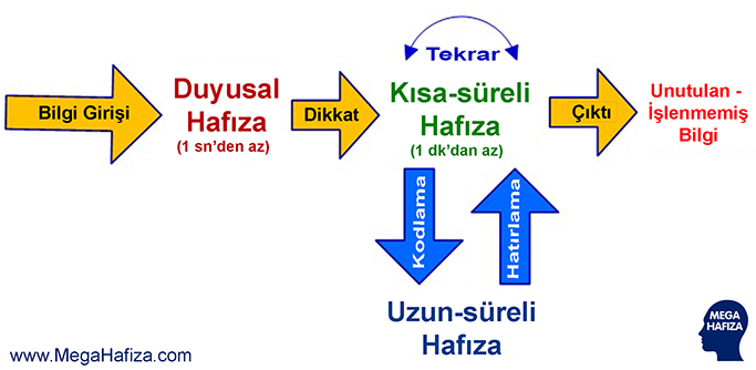 Calisan-Hafiza-Kisa-Sureli-Hafiza