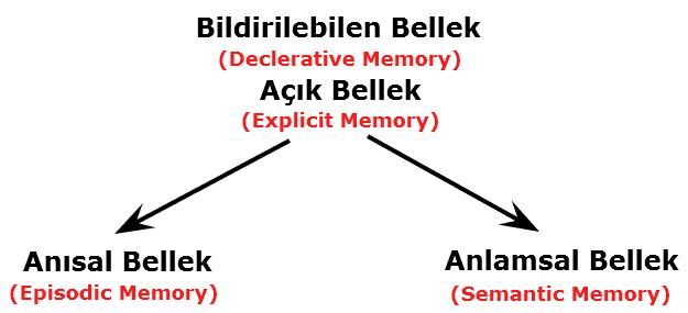 Dr. Endel Tulving - Episodik Bellek / Semantik Bellek