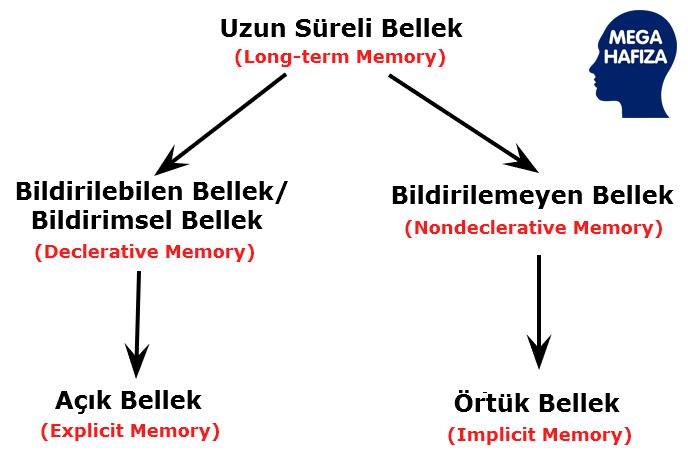 uzun süreli bellek - bildirilemeyen bellek - bildirilebilen bellek - örtük bellek - açık bellek - non-dekleratif bellek - dekleratif bellek