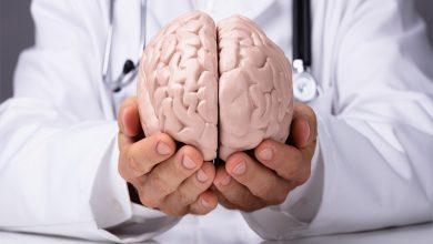 Beyin Araştırmaları