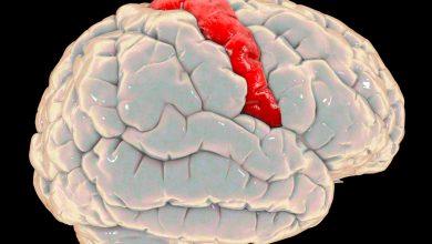 Beynimizi-Tanıyalım - Birincil Motor Korteks Nedir