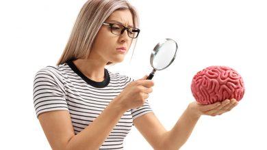 Non-primary Motor Cortex - Birincil Olmayan Motor Korteks Nedir
