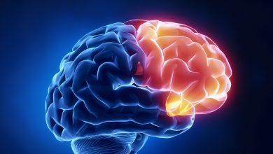 Beynimizi Tanıyalım - Frontal Lobe - Frontal Lob Nedir