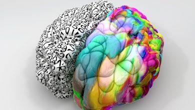 Cerebral Hemispheres Nedir - Serebral Hemisfer Nedir