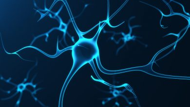 ayna nöronlar nedir - ayna hücreler nedir