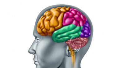 beynimizi tanıyalım - parietal lob nedir