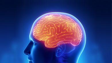 cerebrum nedir - serebrum nedir - beynimizi tanıyalım