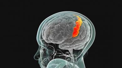 beynimizi tanıyalım - somatosensory korteks nedir - somatosensory cortex nedir